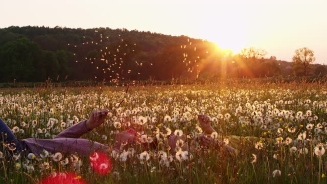slo mo couple  blowing the dandelion seeds on a meadow at sunset - slovenia meadow stock videos & royalty-free footage