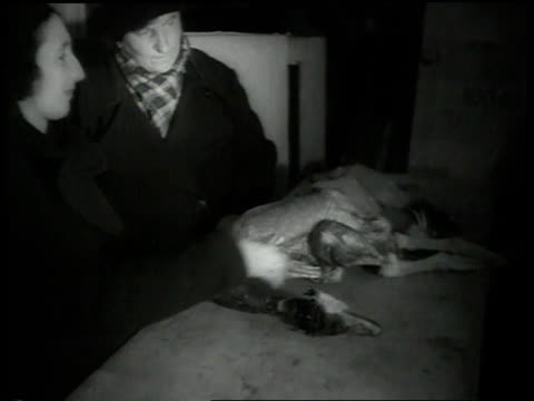 1938 ha couple buying a goose from shop / amsterdam, netherlands - ユダヤ教点の映像素材/bロール