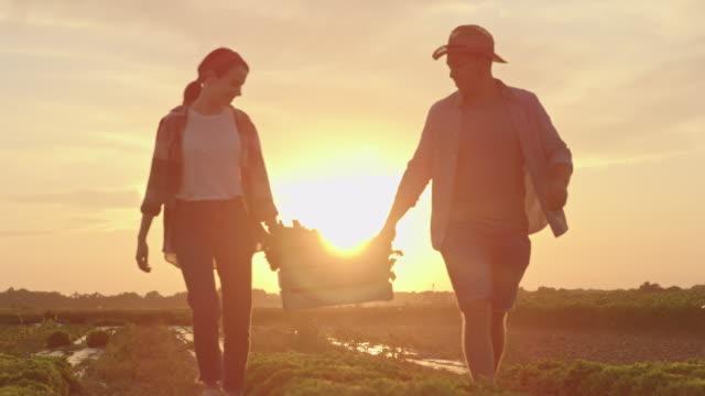 vidéos et rushes de slo mo couple porte une caisse à travers le champ au coucher du soleil - fraîcheur