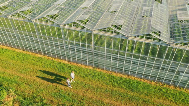 aerial couple carrying a crate full of fresh vegetables along the greenhouse - greenhouse stock videos & royalty-free footage