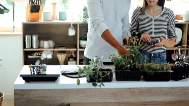 vídeos de stock, filmes e b-roll de pares que verific o crescimento de planta usando o app no telefone - jardim