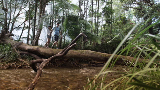 ws, pan, couple crossing stream in tropical rainforest, mossman, queensland, australia - log stock videos & royalty-free footage