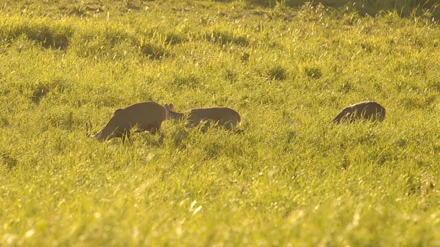 Paar deer morgens