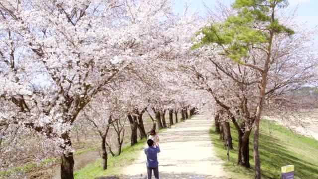 couple enjoying cherry blossom at hahoemaeul(historic village) - south korea couple stock videos & royalty-free footage