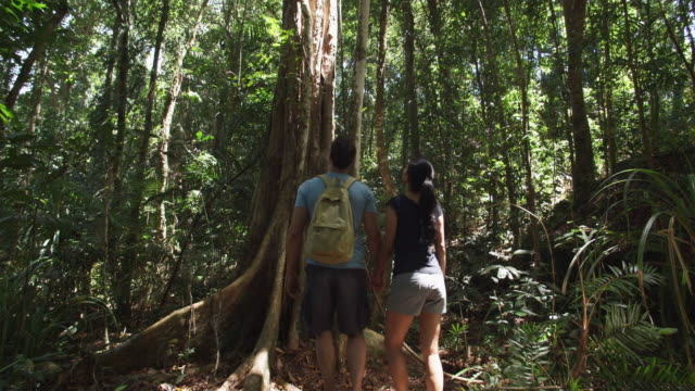 ws, tu, couple hiking in tropical rainforest, rear view, mossman, queensland, australia - recreational pursuit stock videos & royalty-free footage