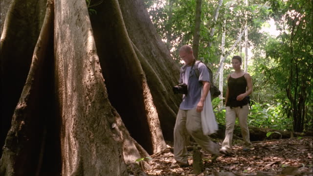 couple hiking past roots of large tree in amazon / brazil - アマゾン熱帯雨林点の映像素材/bロール