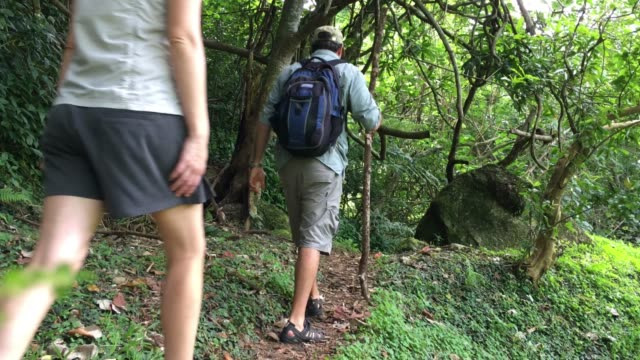 couple hiking the cross island track in the rain forest of rarotonga cook islands - rarotonga stock videos & royalty-free footage