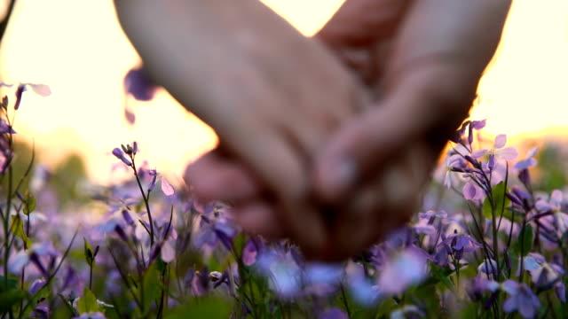 vídeos y material grabado en eventos de stock de pareja cogidos de la mano al atardecer con flores - agarrados de la mano