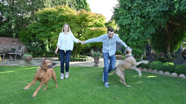 couple in early 20s and active dogs walking across lawn - boxer dog stock videos & royalty-free footage