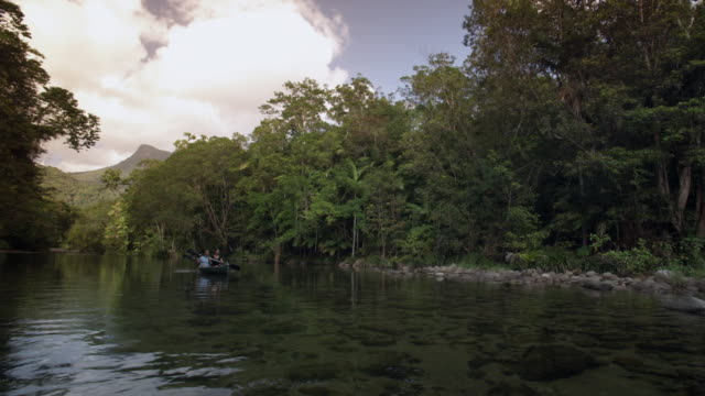 ws, couple kayaking on river in rainforest, mossman, queensland, australia - kayak stock videos & royalty-free footage