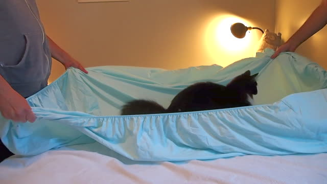 couple making bed while kitten plays - throwing stock videos & royalty-free footage