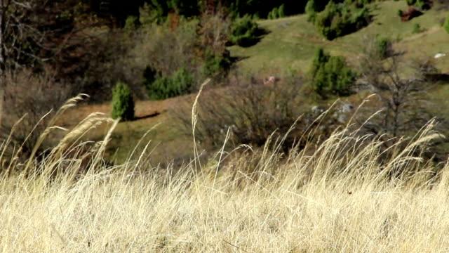 vídeos de stock e filmes b-roll de casal caminhadas na montanha - subir