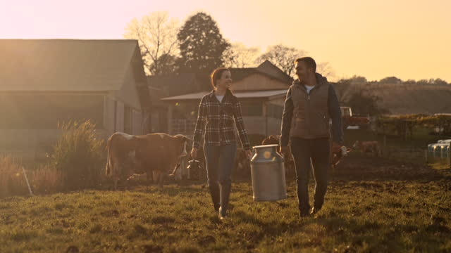 slo mo couple of farmers carrying a barrel of milk across the pasture - ranch stock videos & royalty-free footage
