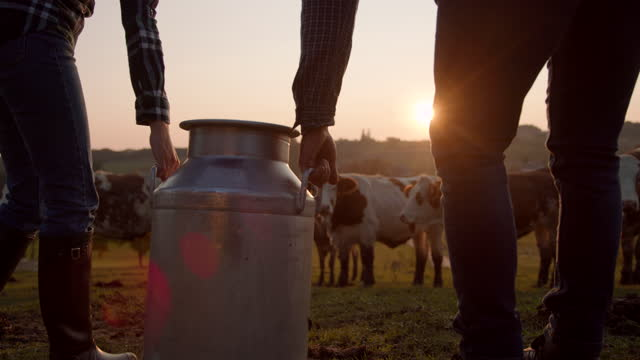 slo mo couple of farmers carrying a barrel of milk across the pasture - female animal stock videos & royalty-free footage
