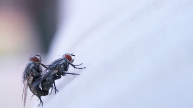 couple of fly on white cloth hand held - fly swat stock videos & royalty-free footage