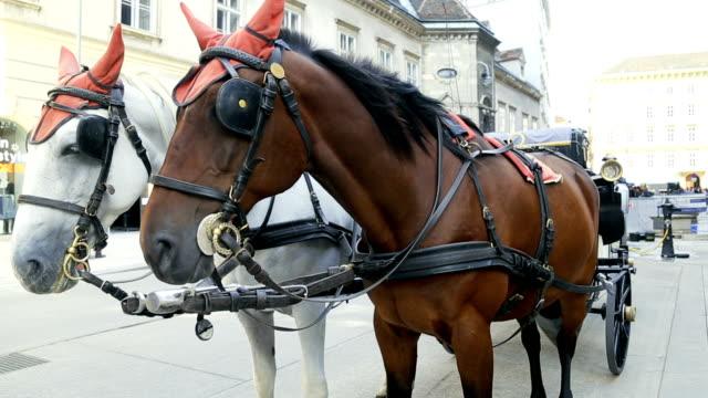 vidéos et rushes de couple de chevaux debout sur une rue - wagon