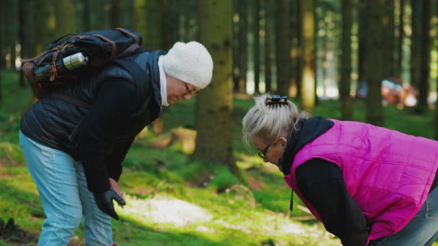 a couple of senior women hiking through a forest - pinaceae stock videos & royalty-free footage