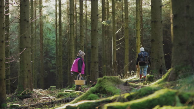 a couple of senior women hiking through a forest - recreational pursuit stock videos & royalty-free footage