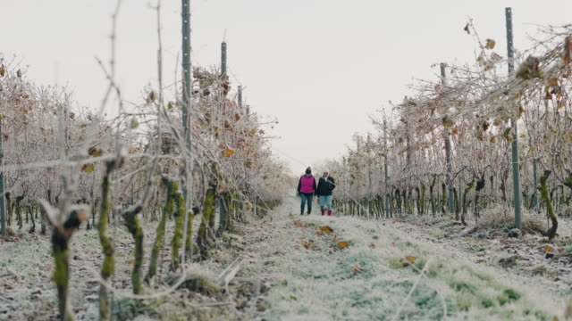a couple of senior women working at a small vineyard - interactivity stock videos & royalty-free footage