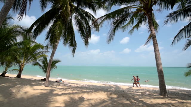 a couple of tourists walk on beach with palm trees - ko samui stock videos and b-roll footage