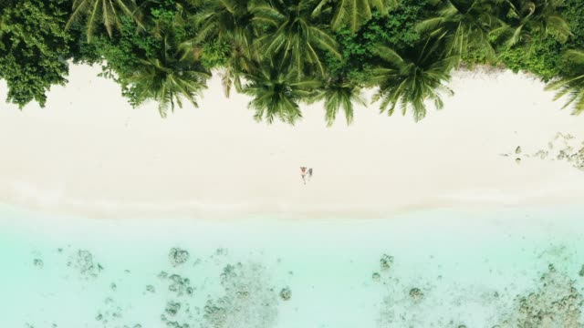 couple on a beach in maldives - palm tree stock videos & royalty-free footage