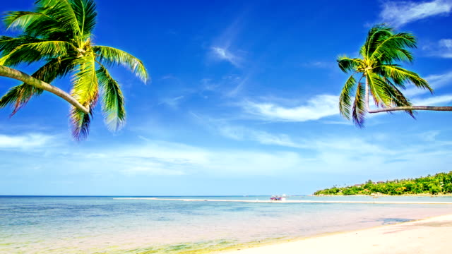 couple palm tree on the beach - caribbean sea stock videos & royalty-free footage