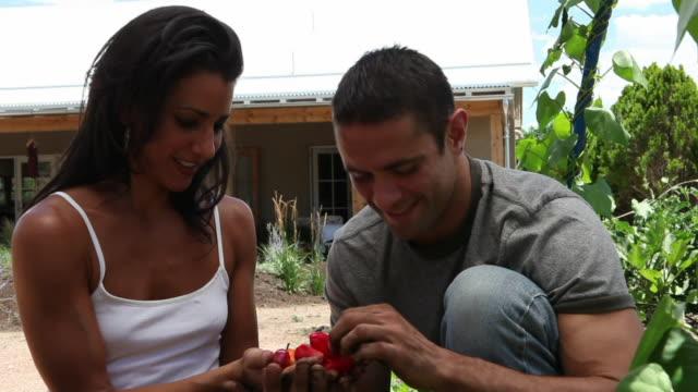 vídeos y material grabado en eventos de stock de cu couple picking vegetables from their garden / santa fe, new mexico, usa - manos ahuecadas