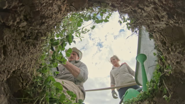 ms couple planting fruit tree in hole and filling with dirt - directly below stock videos & royalty-free footage
