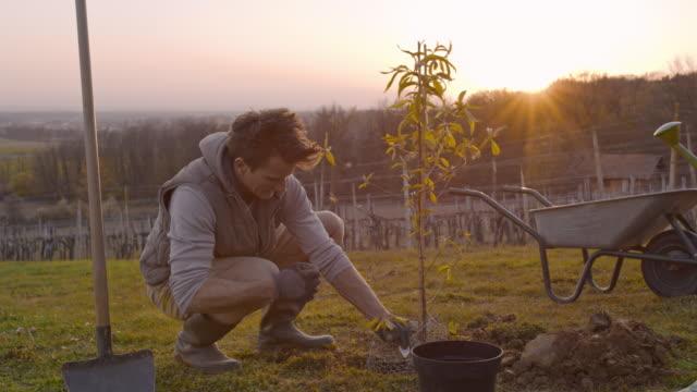 vidéos et rushes de ms couples plantant l'arbre fruitier sur le colline rural ensoleillé et idyllique au coucher du soleil - plante