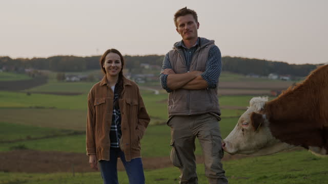 slo mo couple posing next to a cow on a pasture - stroking stock videos & royalty-free footage
