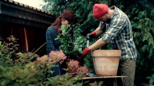 couple replanting flowers in the garden - gardening stock videos & royalty-free footage