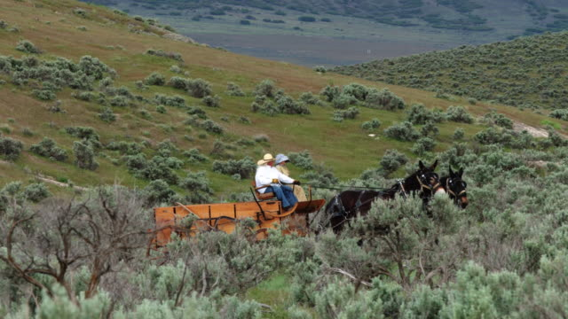 Couple Riding in Cart Pulled by Mules