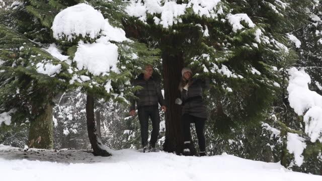 vídeos de stock, filmes e b-roll de couple shake snow off of heavily laden tree branches - mitten