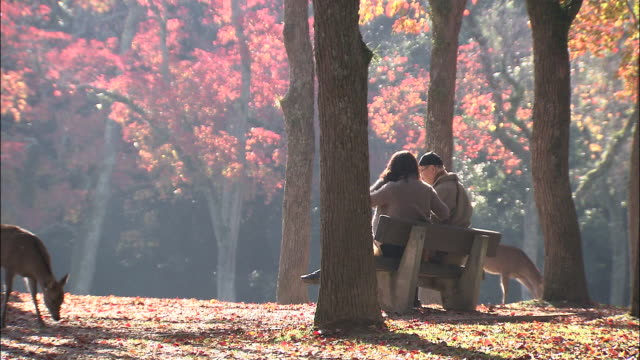 a couple sits on a bench in nara park where gentle deer roam and graze. - nara prefecture stock videos and b-roll footage
