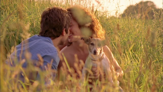 ms couple sitting in field with dog and kissing / brussels, brabant, belgium - falling in love stock videos & royalty-free footage