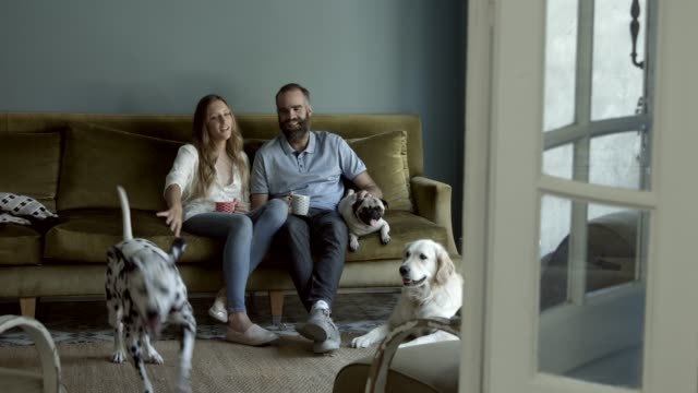 couple sitting with dogs at home - 35 39 jahre stock-videos und b-roll-filmmaterial