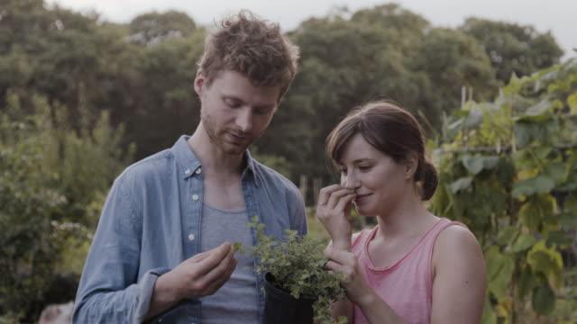 vidéos et rushes de couple smell leaves of a oregano plant, standing in a community garden. - jardin potager