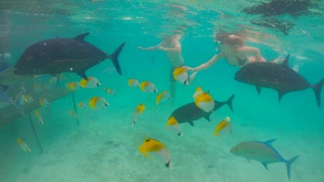 couple swim with giant trevally and tropical fish in rarotonga cook islands - rarotonga stock videos & royalty-free footage