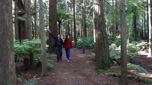 vídeos y material grabado en eventos de stock de couple travel and hikes in giant redwood forests new zealand - secoya gigante