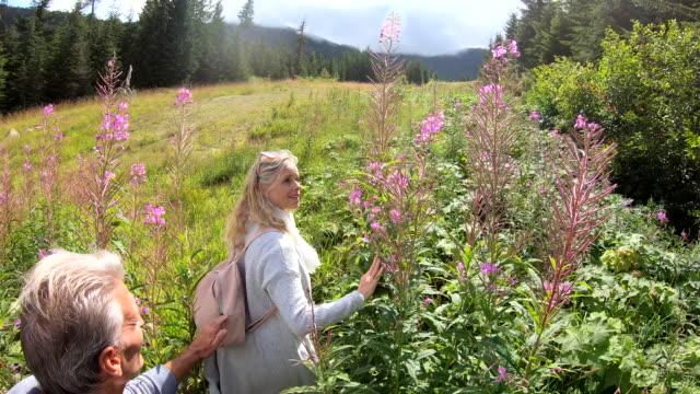 couple walk through mountainside meadow of wildflowers - cardigan sweater stock videos & royalty-free footage
