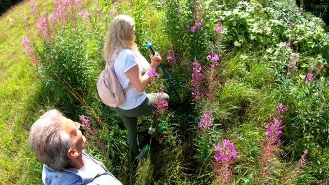 couple walk through mountainside meadow of wildflowers - wildflower stock videos & royalty-free footage