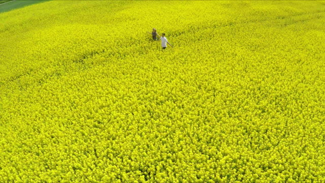 Couple walking in colza fiels - Stock Footage