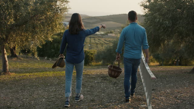 couple walking in olive orchard at sunset - dating stock videos & royalty-free footage