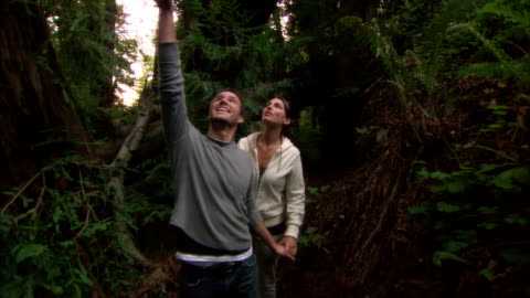 ms, couple walking in redwood forest, ragged point, california, usa - sequoia stock videos & royalty-free footage