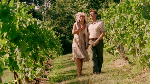 ms, cu, couple walking in vineyard, marlboro, new york state, usa - marlboro new york stock videos and b-roll footage
