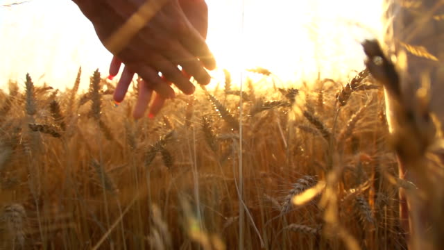 stockvideo's en b-roll-footage met hd super slow-motion: couple walking in wheat field - hand