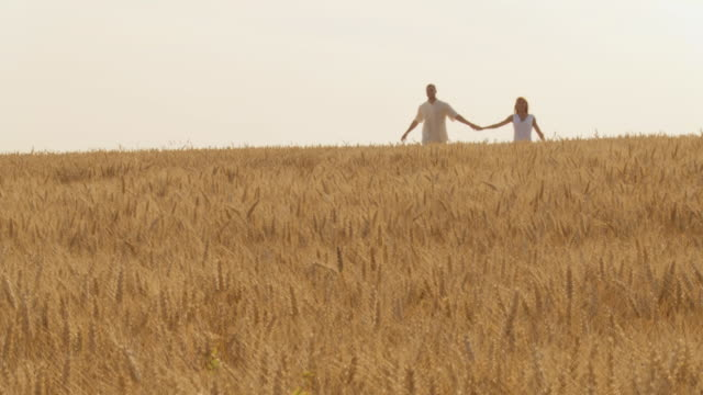 hd slow-motion: couple walking in wheat - skipping along stock videos & royalty-free footage