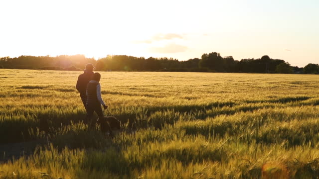 couple walking the dog through a barley field - grass family stock videos & royalty-free footage