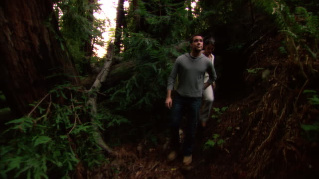 ms, couple walking through redwood forest, ragged point, california, usa - ragged point stock videos and b-roll footage