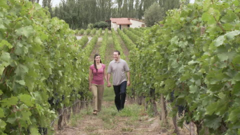 couple walking through vineyard - argentinian ethnicity stock videos & royalty-free footage